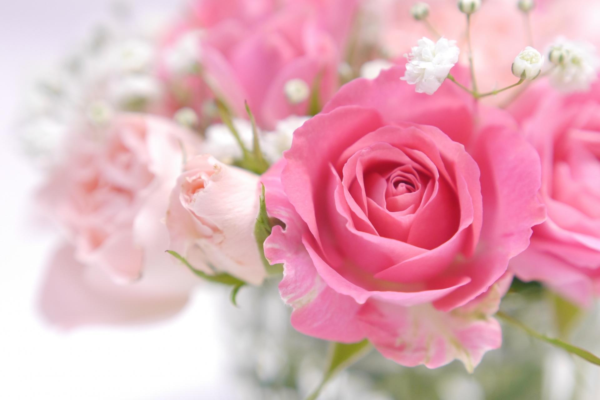 優しい色の薔薇